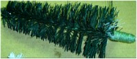 Bottlebrush Tree2a
