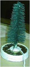 Bottlebrush Tree4a