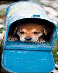 mail card
