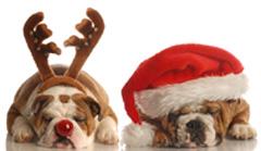 Rudolph and Santa dog